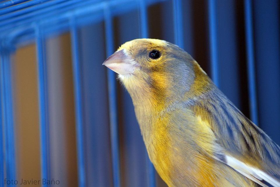 At finde det rette bur for din fugl